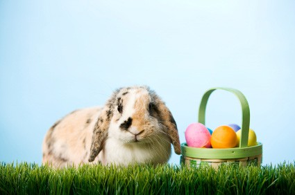 The wht guide to raising and loving rabbits