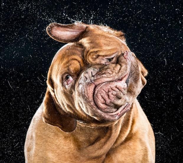 LBL---Shake-Dog