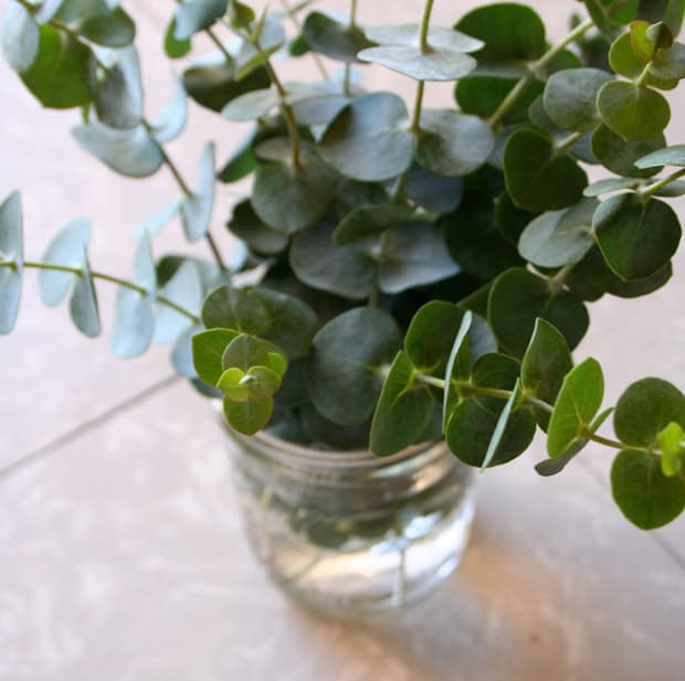 eucalyptus 8 Having a Dinner Party? Tips You Need to Know...