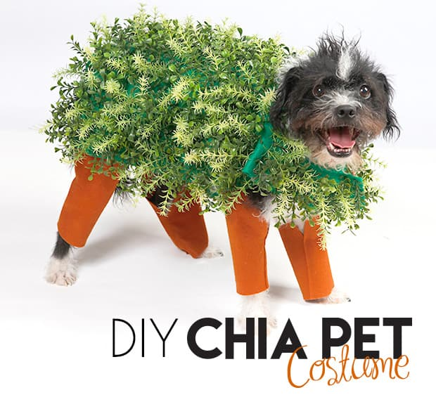 Diy halloween chia pet dog costume we heart this diy halloween chia pet costume 1 diy halloween chia pet dog costume solutioingenieria Choice Image