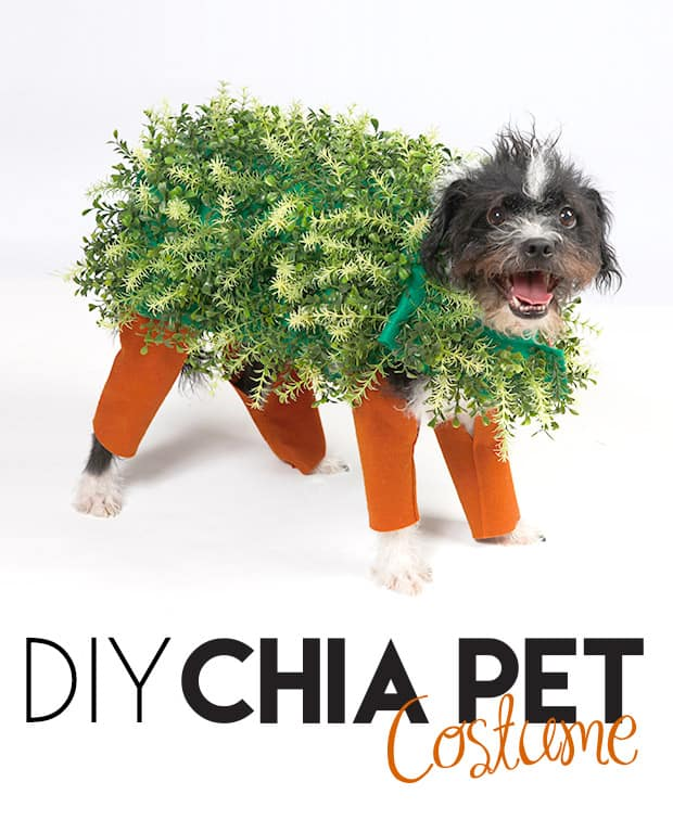 DIY-Chia-Pet-Halloween-Costume-2