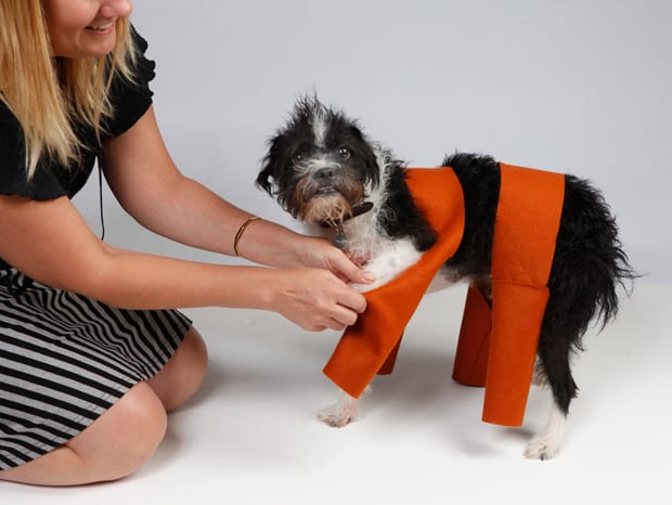 DIY-chia-pet-dog-costume-dog-pants