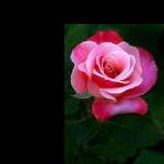rosedc265370e9d7f915263b513103b8d83b avatar2 Audrey Vang